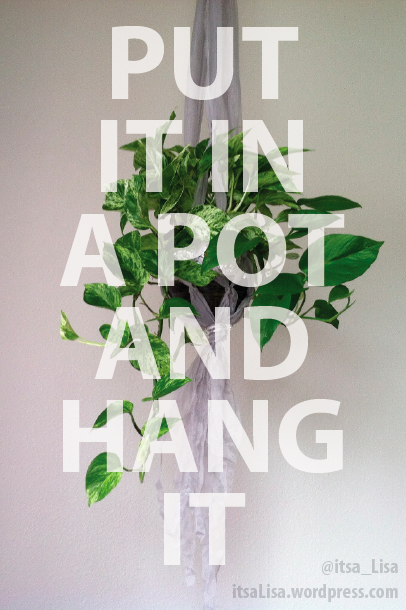 hanging plants DIY