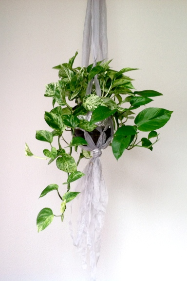 Diy Plant Hanger Craft How To Hang Your Pothos Indoors