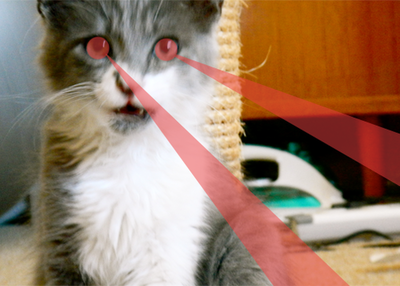 kitten lazers