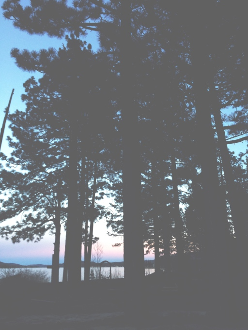 Pine Trees Sunset | itsaLisa.com