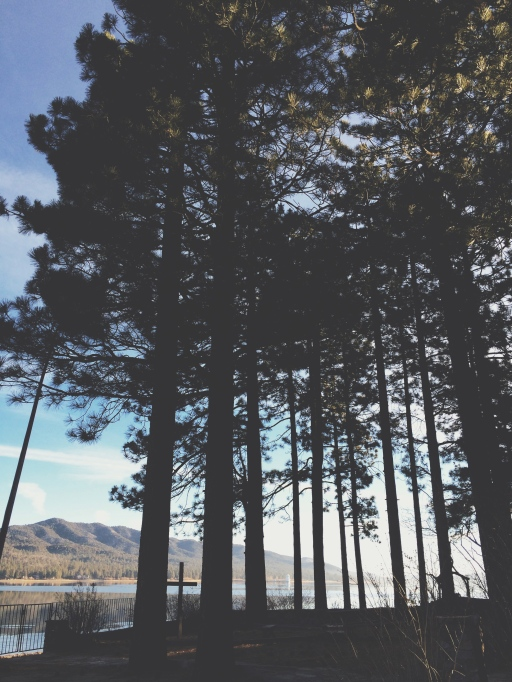 Pine Trees and Sunset | itsaLosa.com