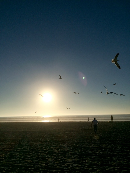 mission beach sunset and seagulls - itsaLisa.com