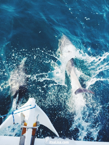 Dolphins in the Wild | itsaLisa.com
